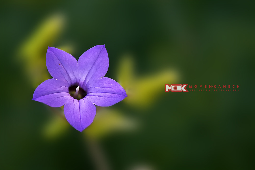 Photograph flower by Momen Kanech on 500px