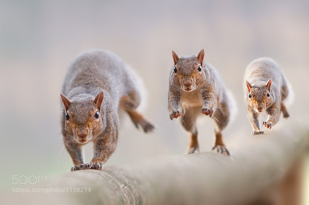 Photograph to run by Stefano Ronchi on 500px
