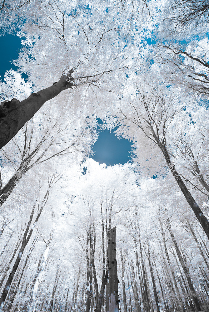 Photograph the blue sky by Jesper Madsen on 500px