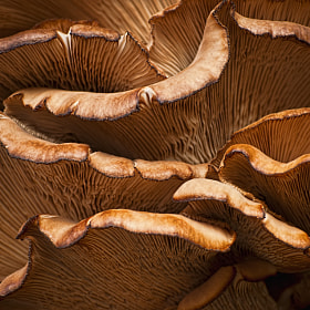 Mushroom waves  by Ivelina  Aasen (Dreamymoonlight)) on 500px.com