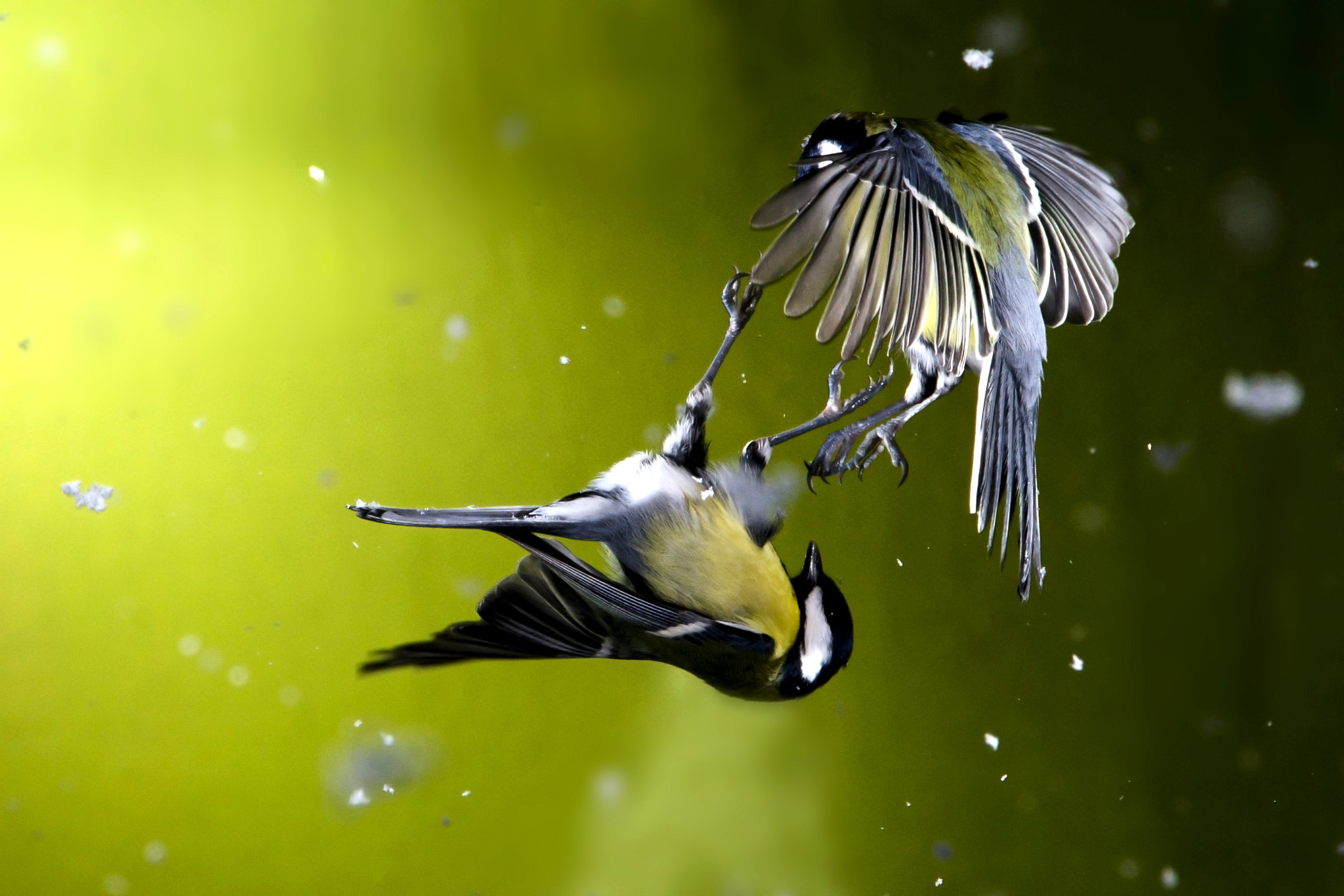 Photograph Fighting for Food by Mike Meysner on 500px