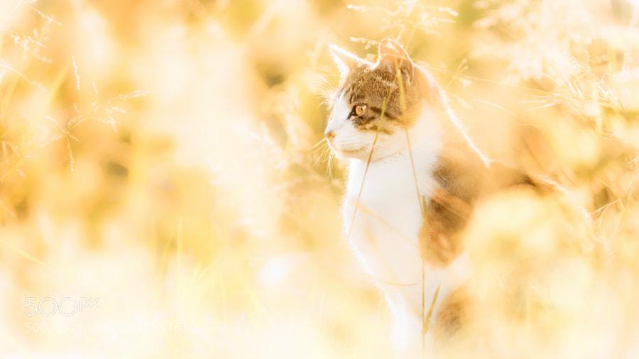 Photograph Waltz of The Light by Seiji Mamiya on 500px