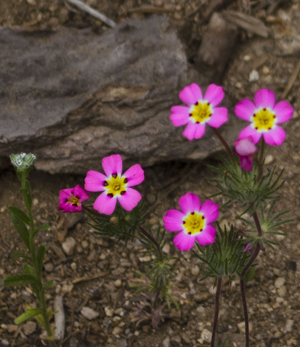 Photograph Flowers and a Rock by Michael Sheltzer on 500px