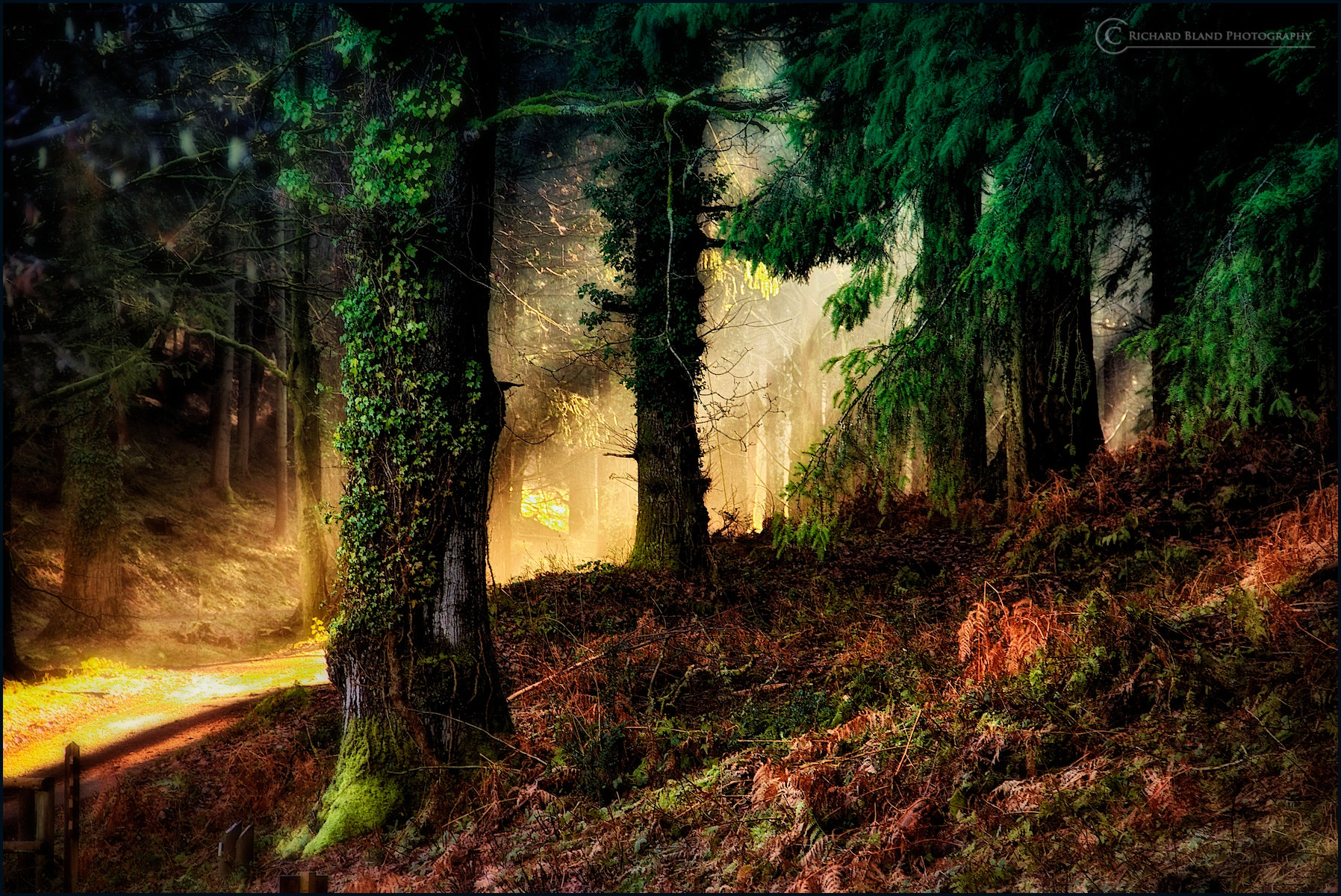 Photograph Forest by Richard Bland on 500px
