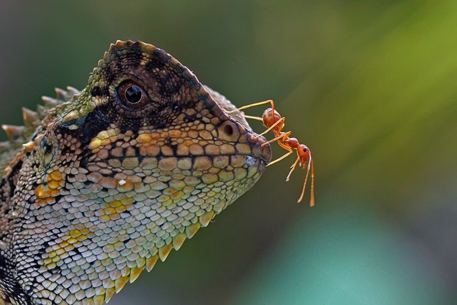 Photograph Brave Ant by teguh santosa on 500px