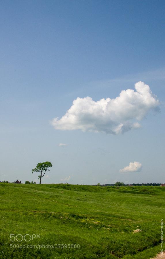Sky and tree by Tolik Maltsev on 500px.com