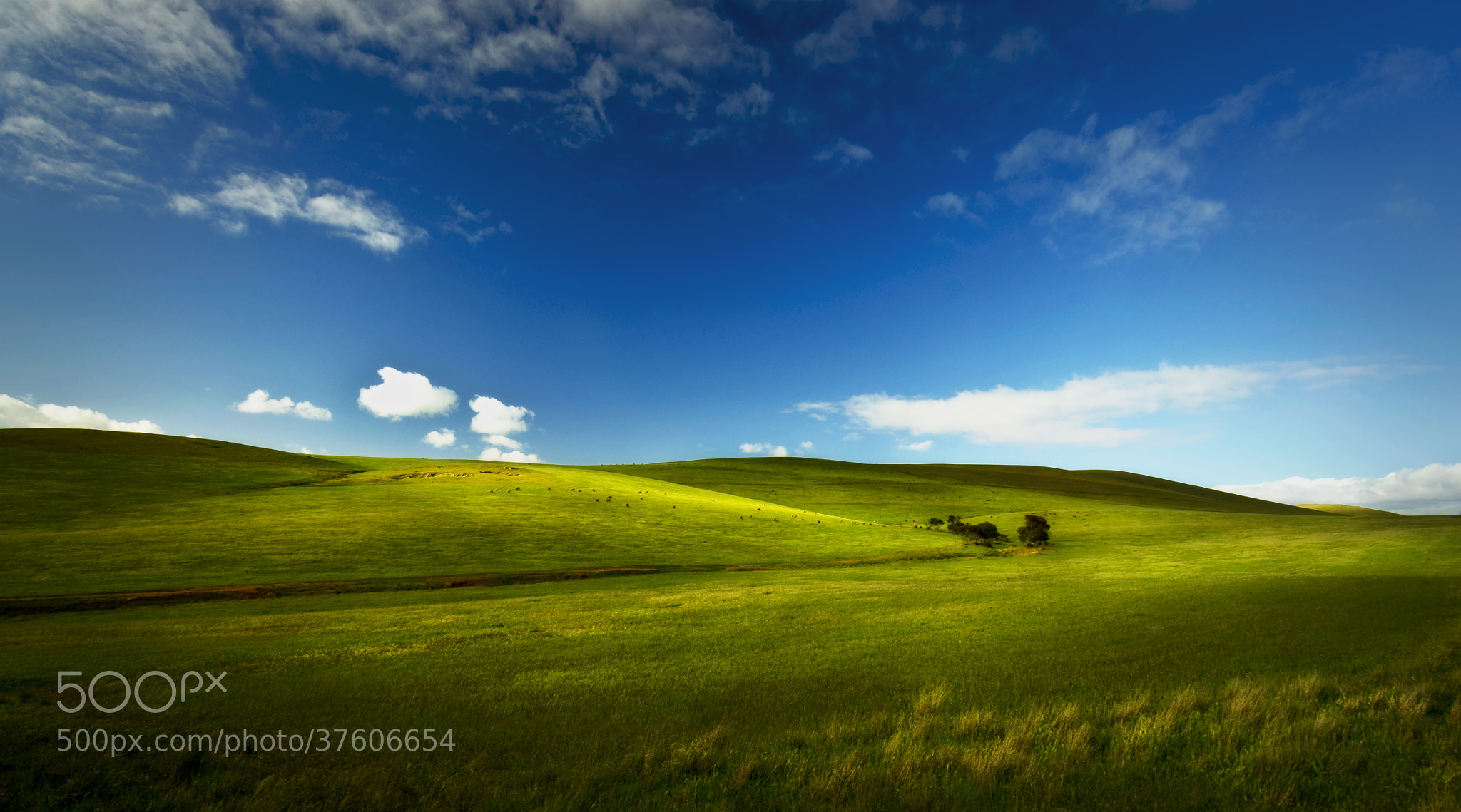 Photograph Rolling Fields by Aaron Bishop on 500px