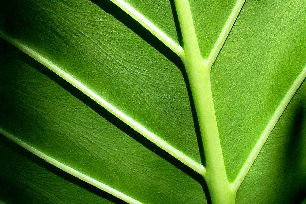 Photograph green leaf by kayla lister on 500px