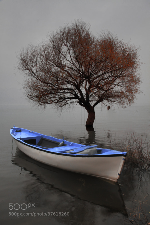 """Photograph """"serenity""""  (fog&lake) by e&e photography on 500px"""