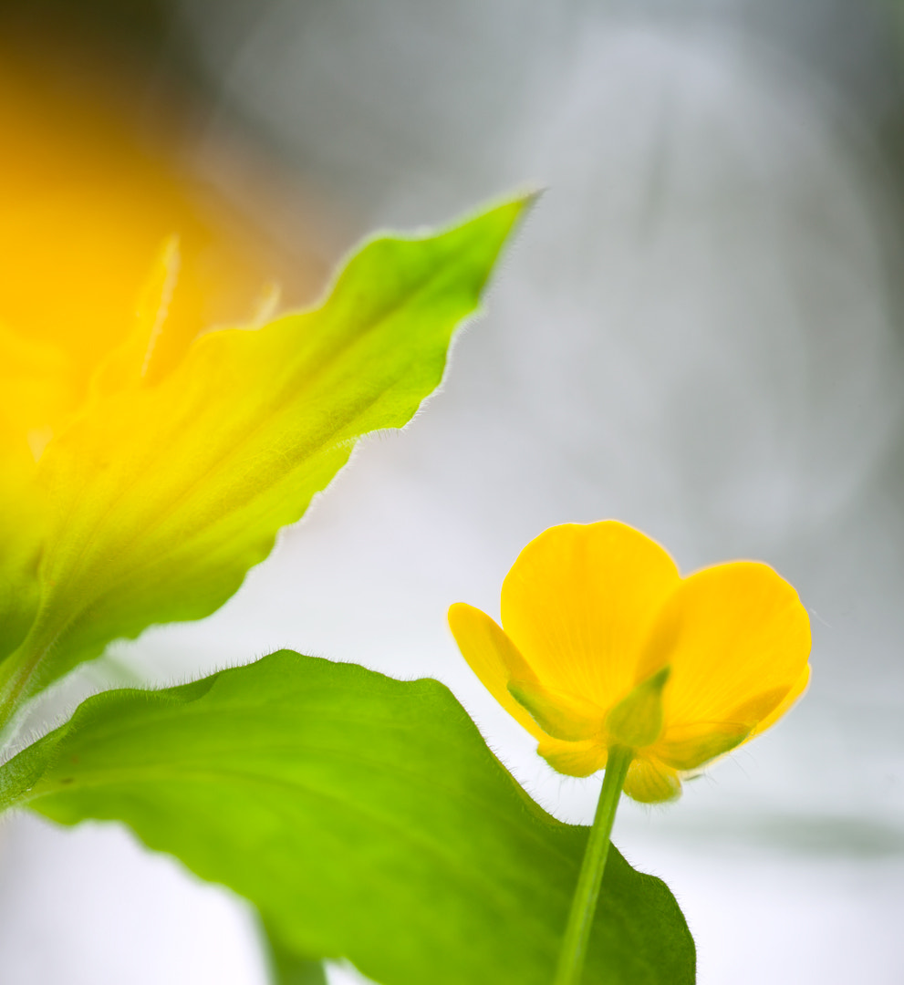 Photograph The yellow one! by Tone Sundland on 500px