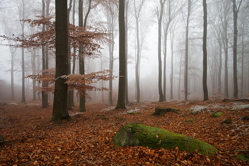Photograph Forest by Martin Rak on 500px