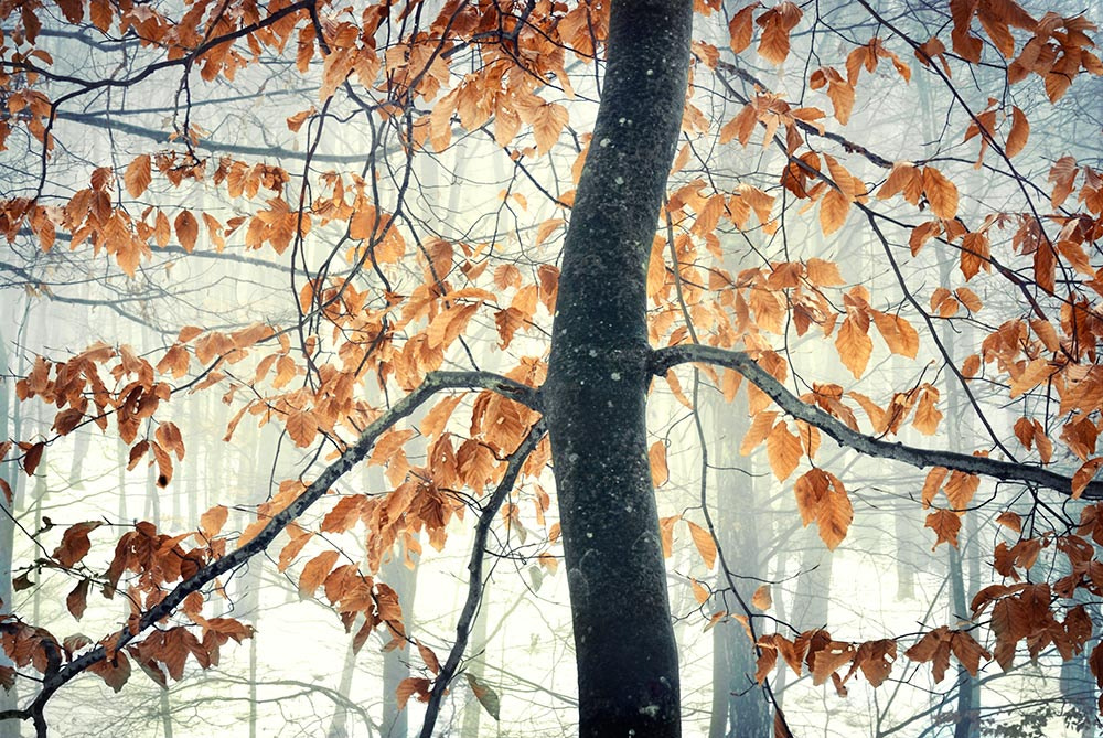 Photograph The snowy forest by Tony  on 500px