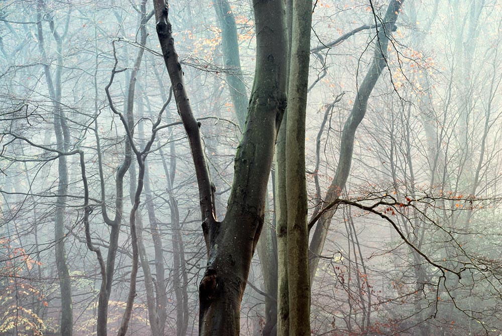 Photograph Epping Forest, Essex by Tony  on 500px