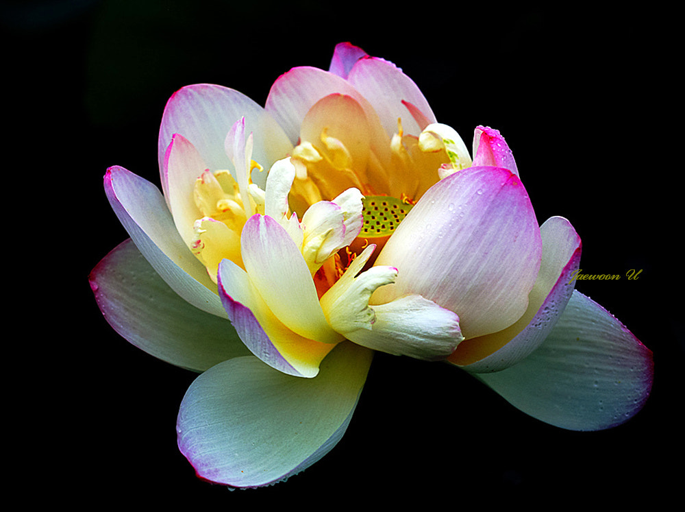 Photograph LOTUS by Jaewoon U on 500px