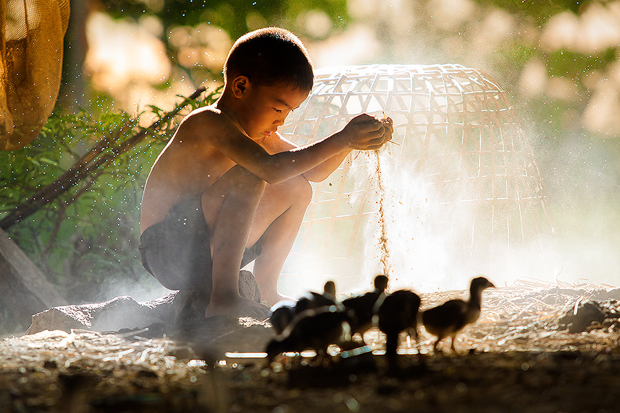 """Photograph Chicken Boy"""""""" by jeerasak Chaisongmuang on 500px"""