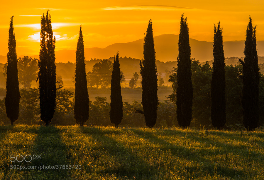 "<a href=""http://www.hanskrusephotography.com/Workshops/Tuscany-May-12-16-2014/29524379_ftL23j#!i=2525410208&k=9KpdShv&lb=1&s=A"">See a larger version here</a>