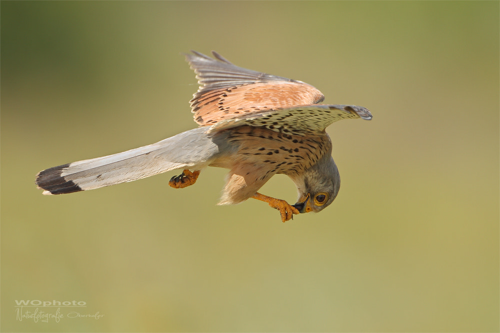 Photograph snack in flight by Walter Oberhofer on 500px