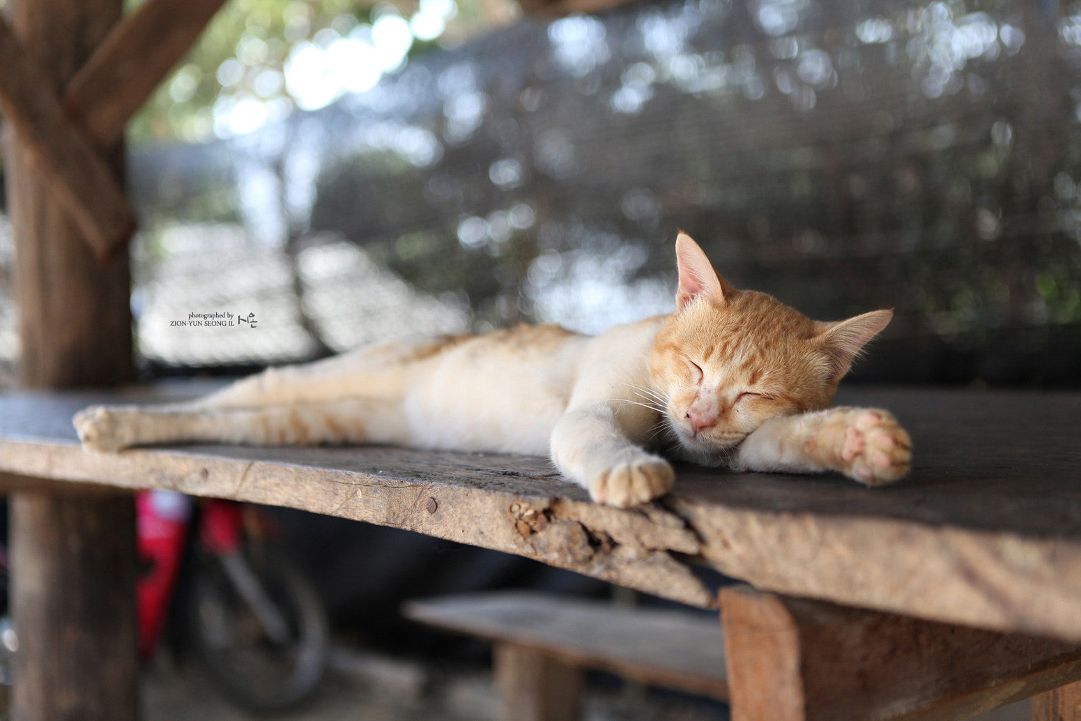 Photograph snooze by GalleryZION on 500px