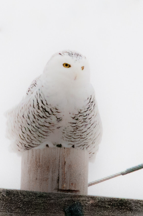 Photograph White on White by Brian Heska on 500px