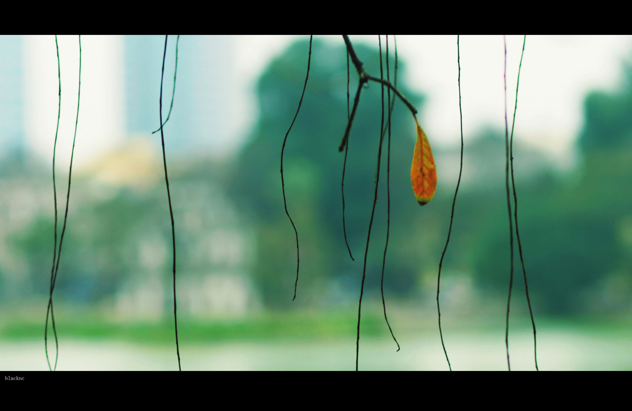 Photograph the last leaf  by tung nguyencanh on 500px