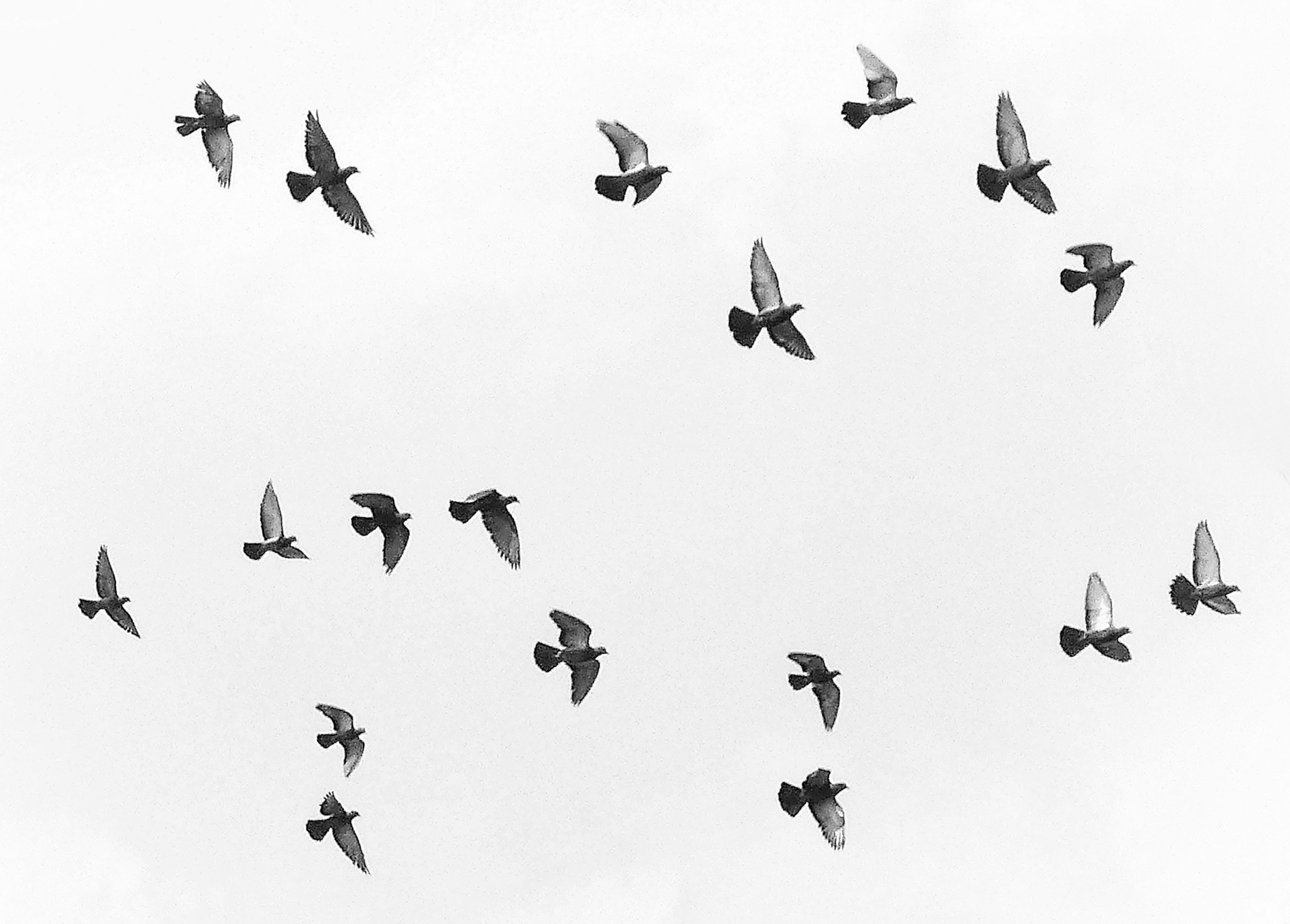 Photograph Flight of Freedom by Henry Wong on 500px