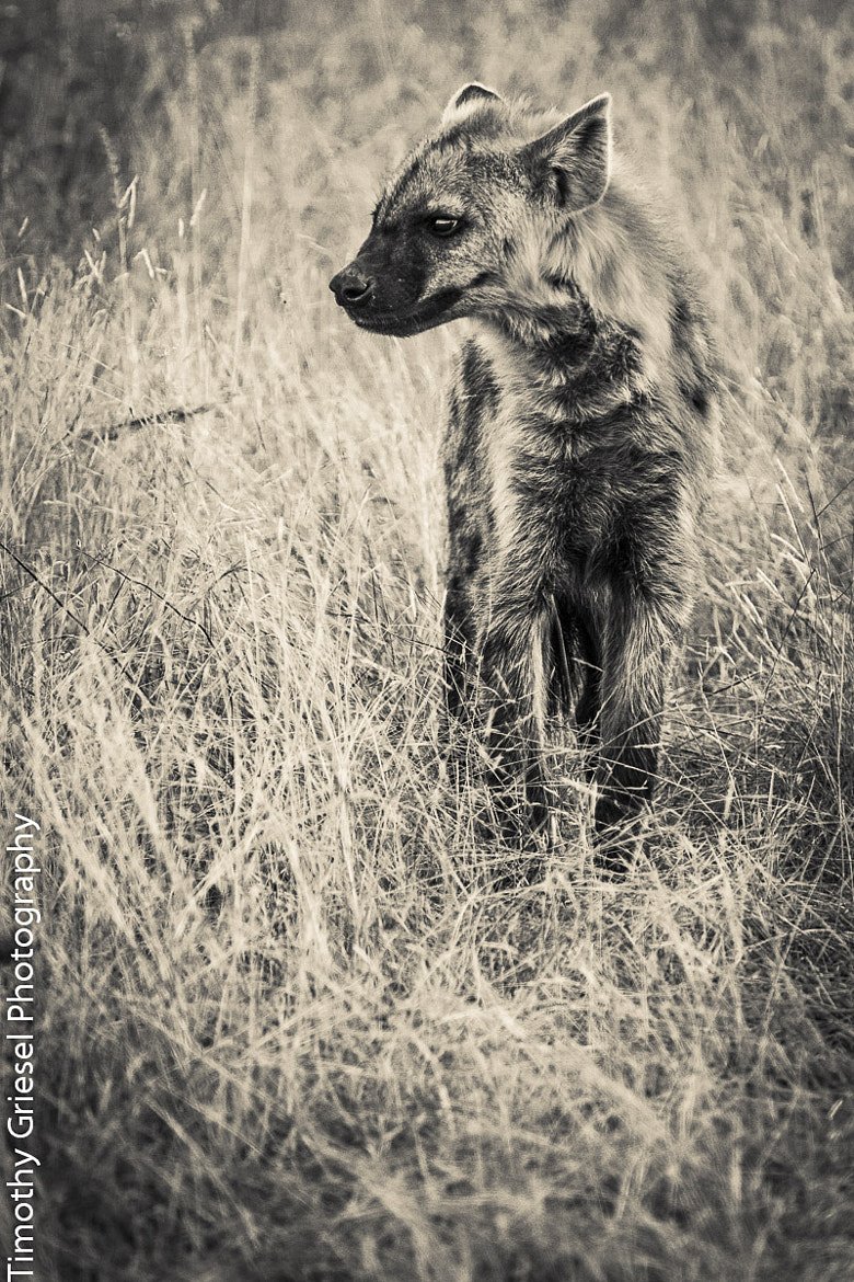 Photograph Curious Pup by Timothy Griesel on 500px