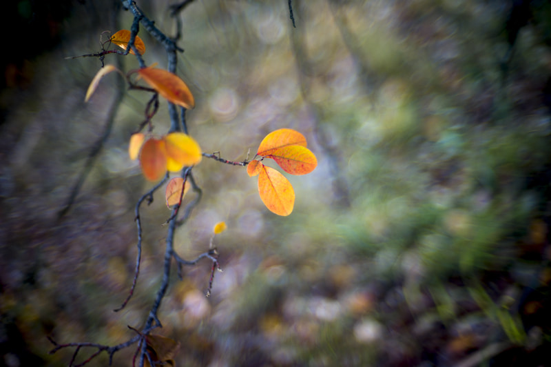 Photograph last leaves by alistair noble on 500px