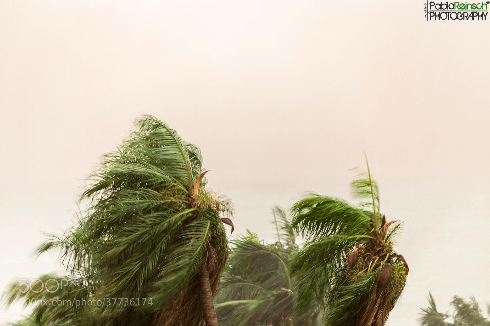 Photograph Azotadas por el viento.- by Pablo Reinsch on 500px