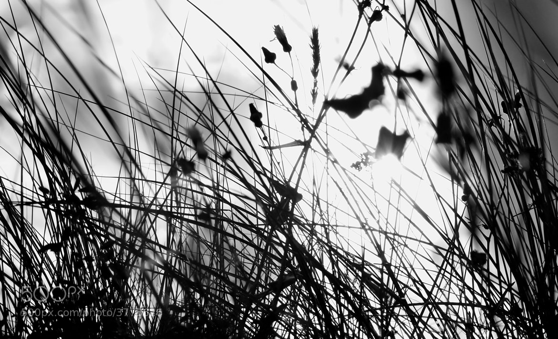 Photograph Sunrise by Liv Kristin Vanggaard Kaupang on 500px