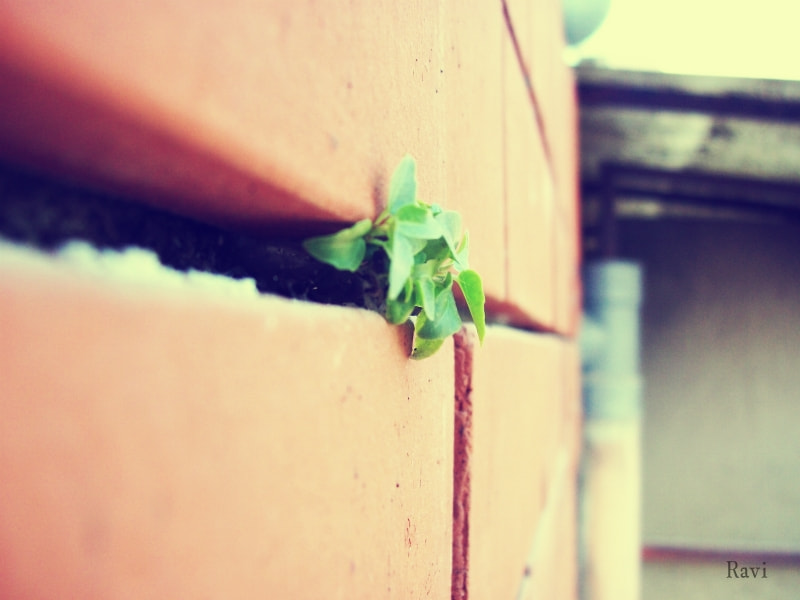 Photograph alone plant on a high wall by Ravi sharma on 500px