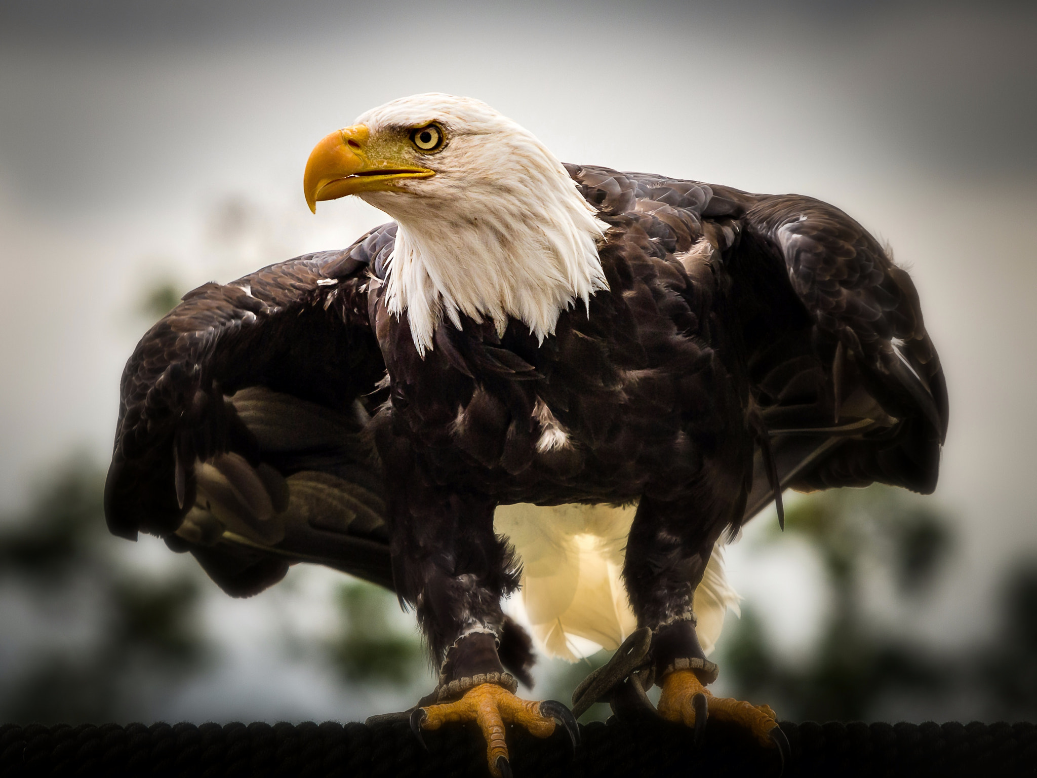 Photograph Bald Eagle by Hubertus Theile on 500px