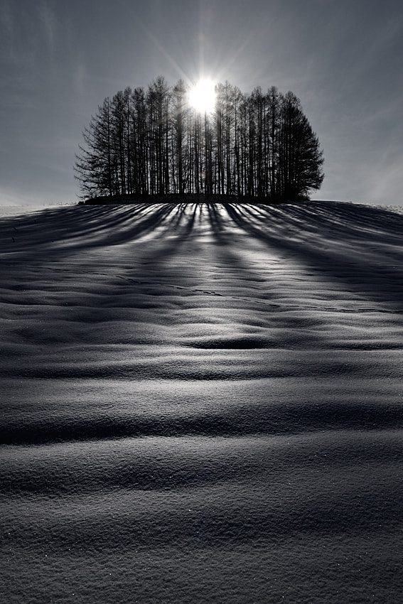 Photograph The sun and shadows B&W by Kent Shiraishi on 500px