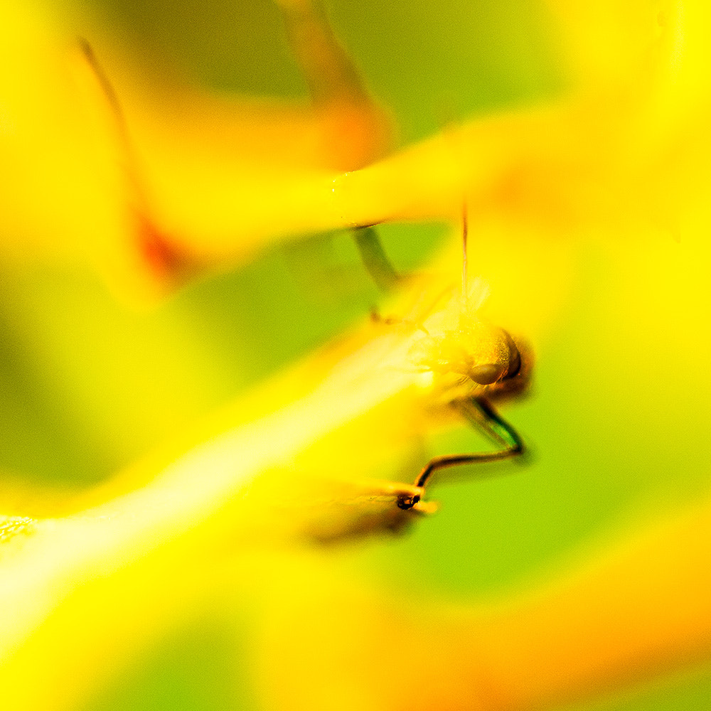 Photograph Yellow bug by Pierre Nadler on 500px