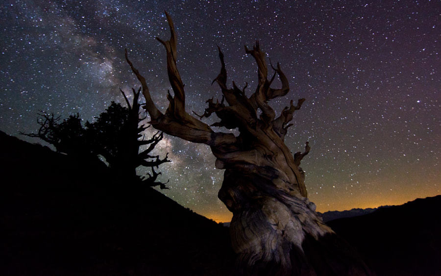 """Bristlecone Pine tree.  This is a frame from my forthcoming movie """"TimeScapes"""". See this shot in motion here:  http://vimeo.com/16369165   5D Mark II, EF 14mm, 34 seconds, ISO 3200, f/3.2."""