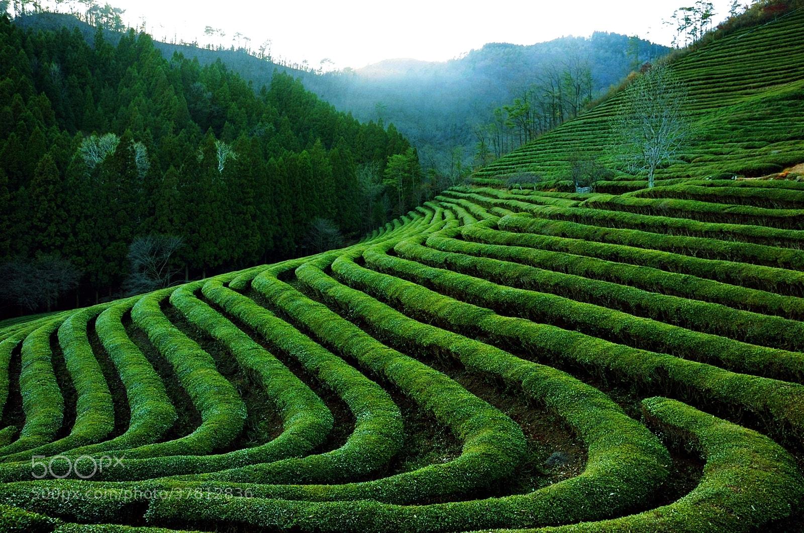 Photograph Green Tea by RYNTEN  on 500px