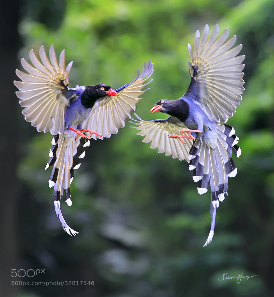 Photograph Dancing together by Jasen Yang on 500px