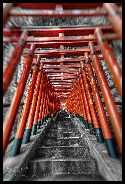 Photograph Torii Story Redux by Jon Sheer on 500px