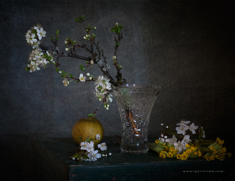 Photograph Plum branch in bloom by Igor Sirbu on 500px