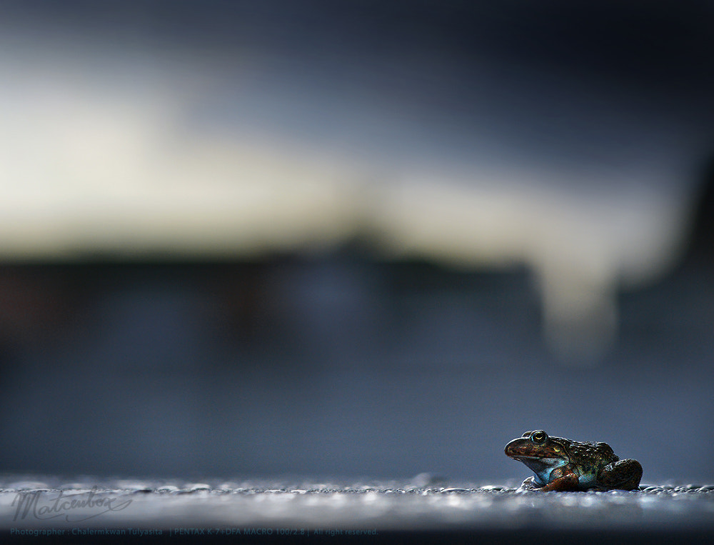 Photograph Little frog to town : ) by Matcenbox  on 500px