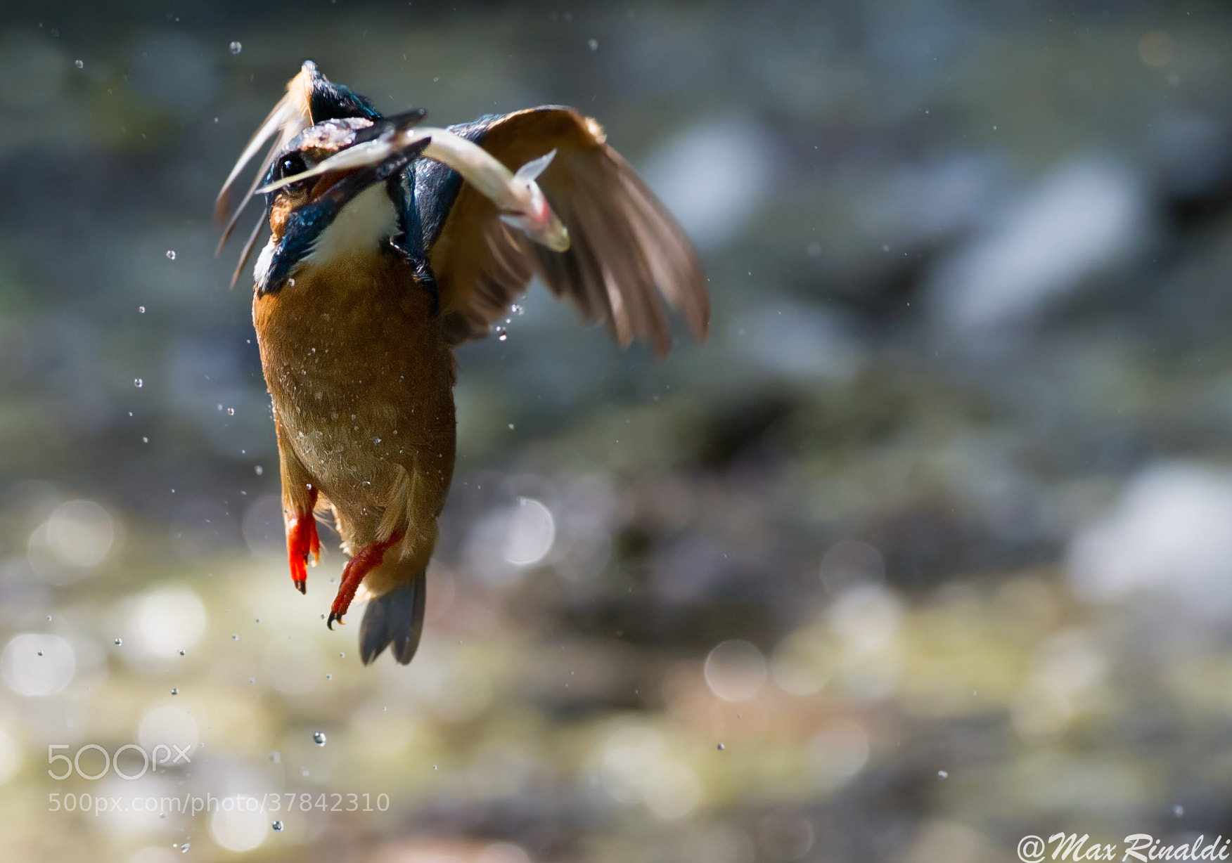 Photograph Flying Bubbles by Max Rinaldi on 500px