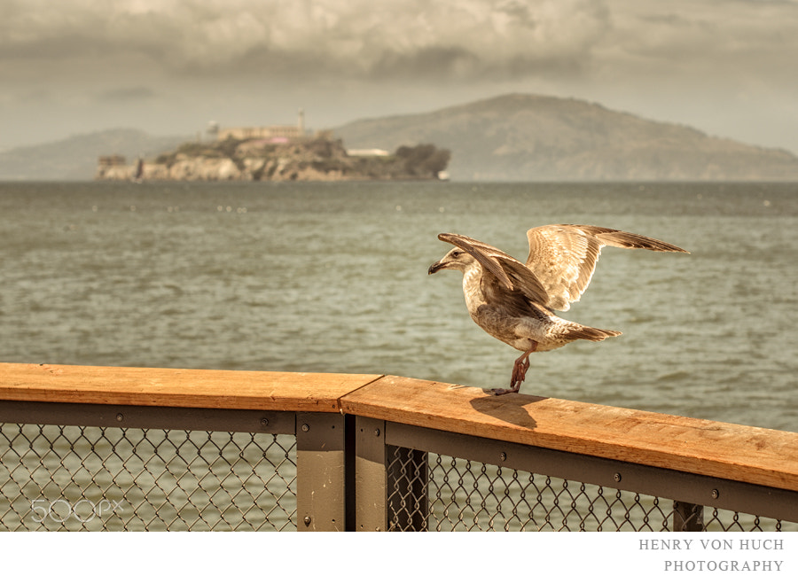 Photograph next flight to alcatraz by Henry von Huch on 500px