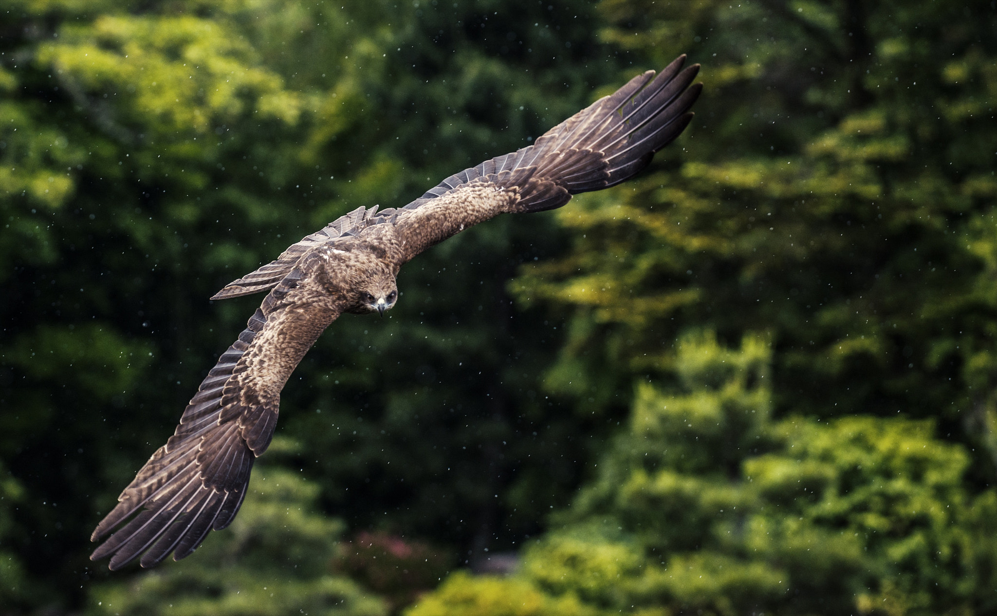 Photograph Flying in for the kill by hugh dornan on 500px