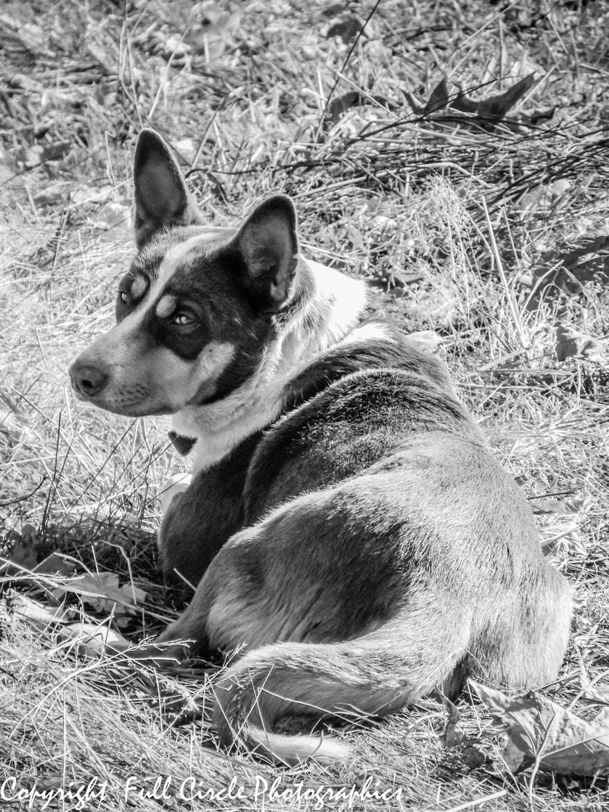 Photograph June's Memory (Portrait Of My Daughter's Dog) by Pandyce McCluer on 500px