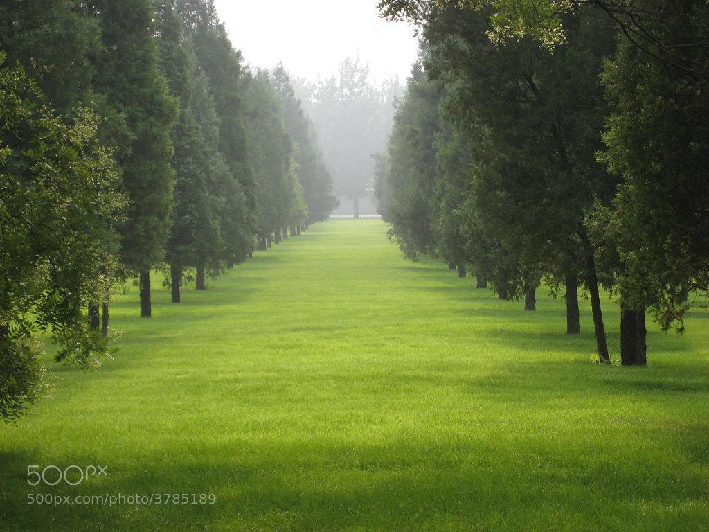Photograph Green paradise by waynekorea on 500px