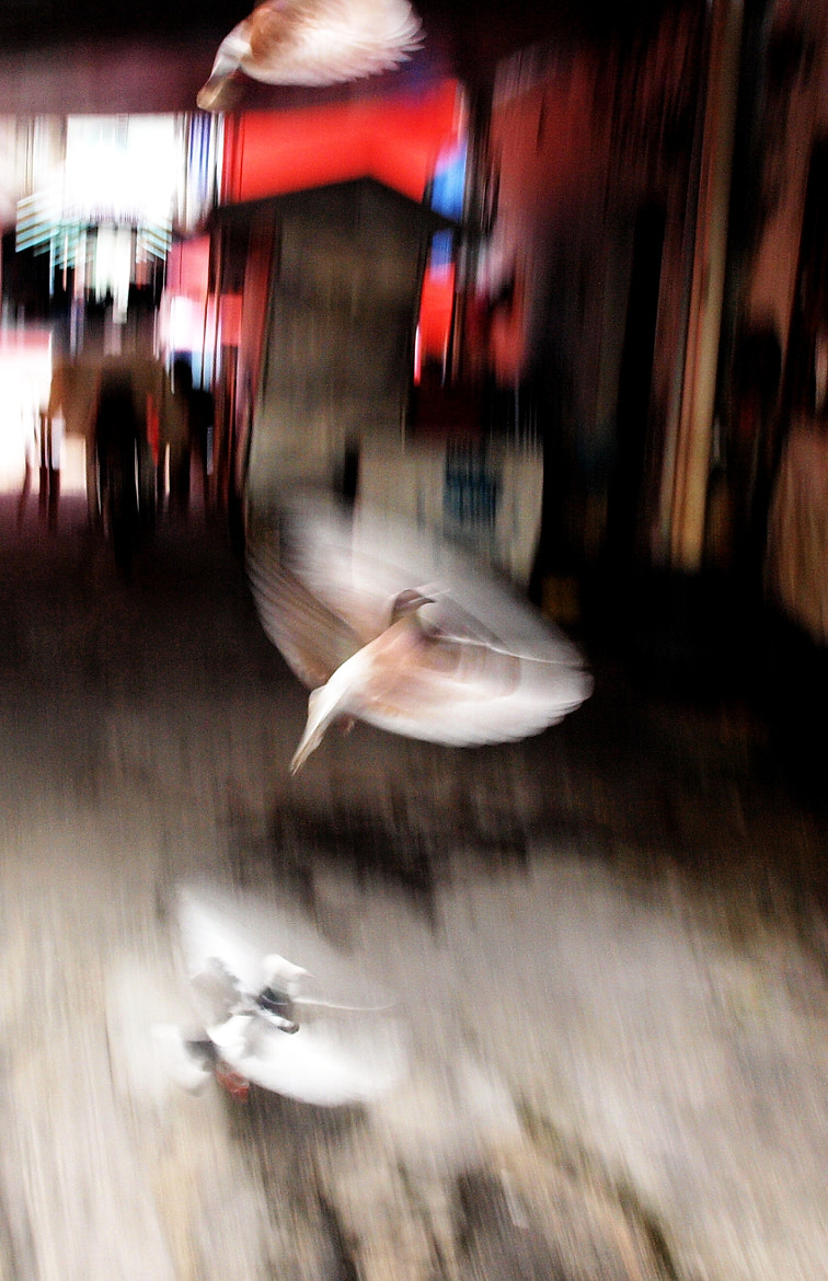 Photograph Alley City Birds by Zulkifle Che Abdullah on 500px