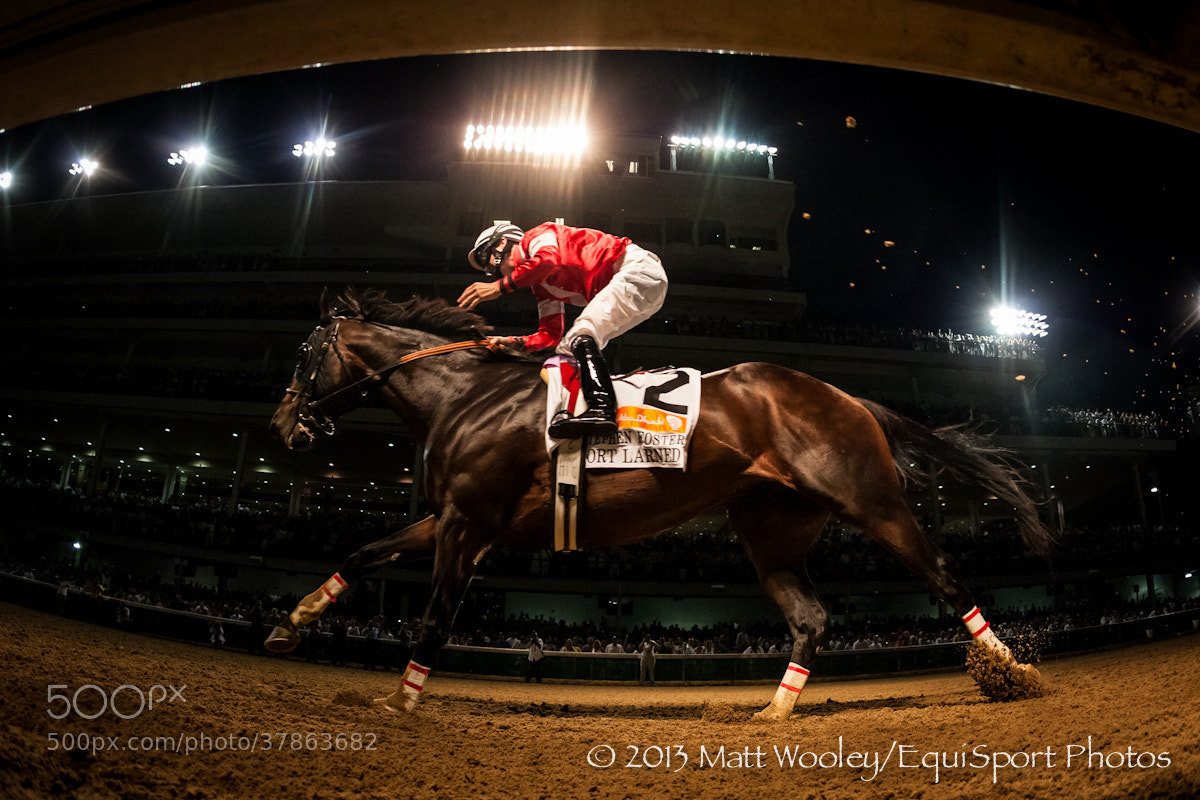 Photograph Under the Rail - Fort Larned by EquiSport Photos on 500px
