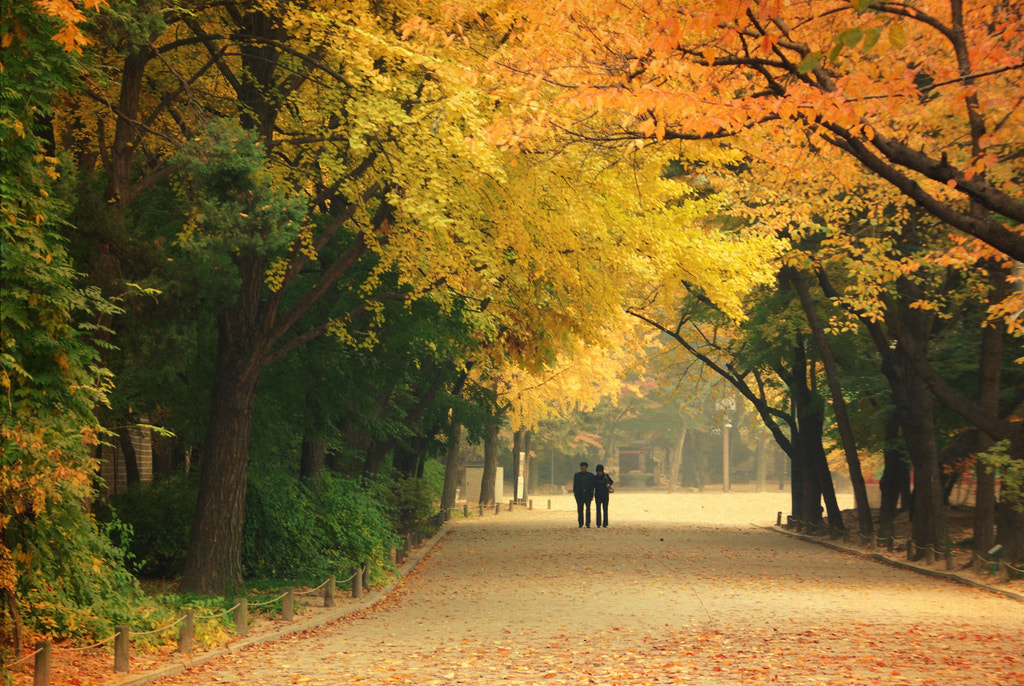 Photograph Love in the Fall by waynekorea on 500px
