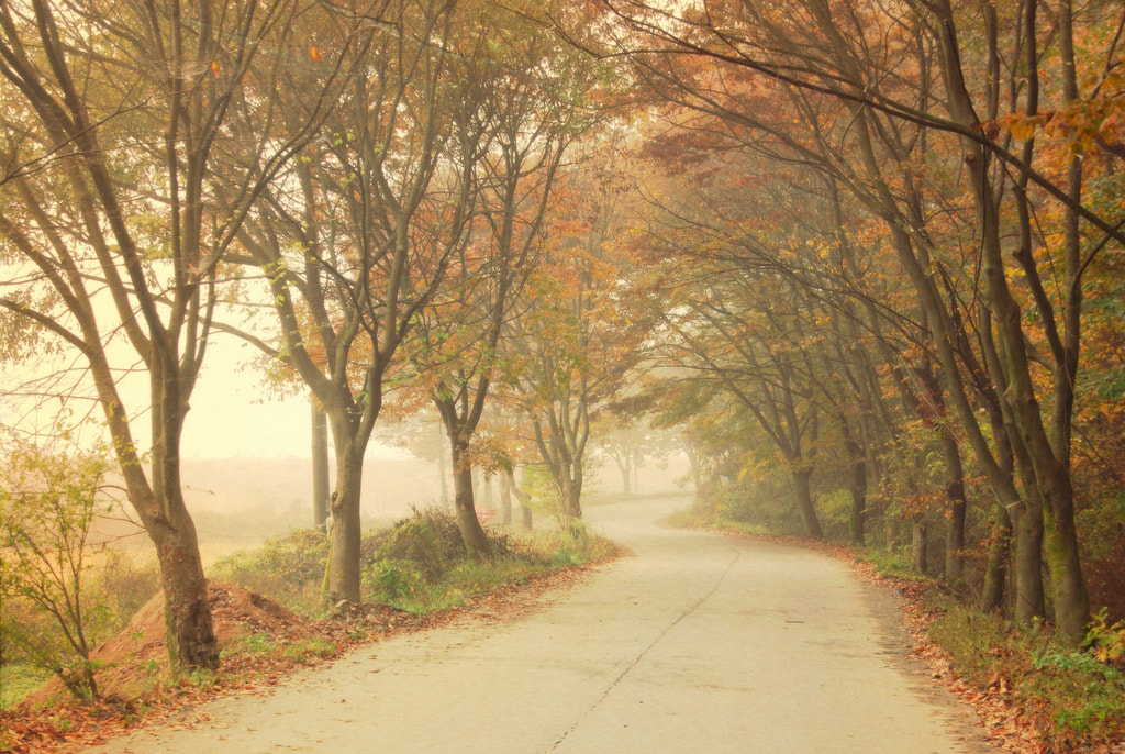 Photograph The end of fall by waynekorea on 500px