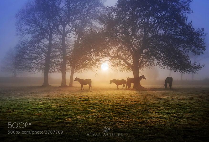 Photograph Under the tree by Alvar Astúlez on 500px
