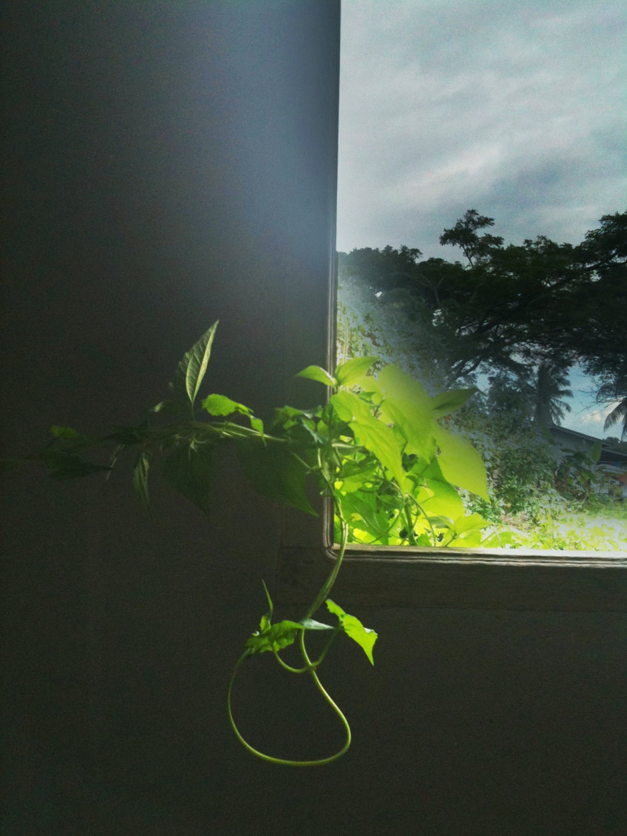 Photograph Window iPhone by Zulkifle Che Abdullah on 500px